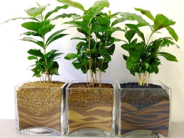Illuminazione per piante da appartamento: illuminazione artificiale